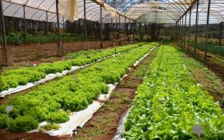 fazenda alfaces ufu ffd